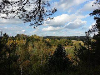 Aussicht über eine Waldlandschaft
